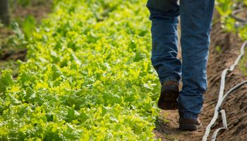 Horticultura: una de las actividades agropecuarias que más mano de obra genera