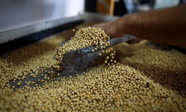 Hot Sale de soja, trigo y maiz: ¿Por qué para los productores dura todo el año?