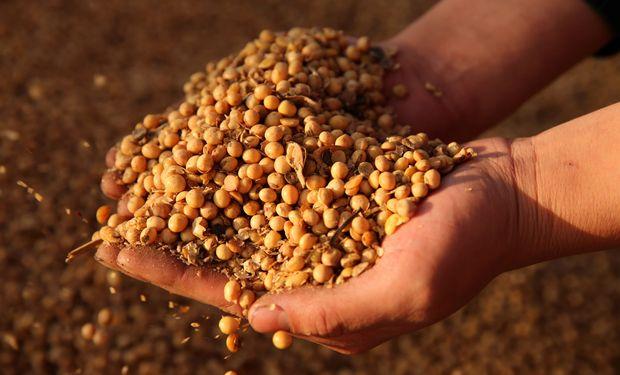 Cae la soja en Chicago por la incertidumbre en el acuerdo comercial.
