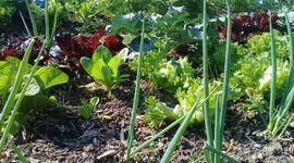 INTA lanza un curso de agroecología y abordará horticultura, fruticultura, agroforestería y ganadería