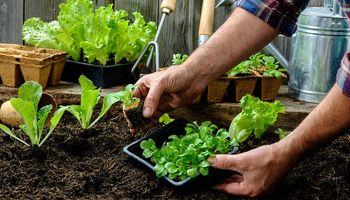 9 pasos para construir una huerta en tu casa