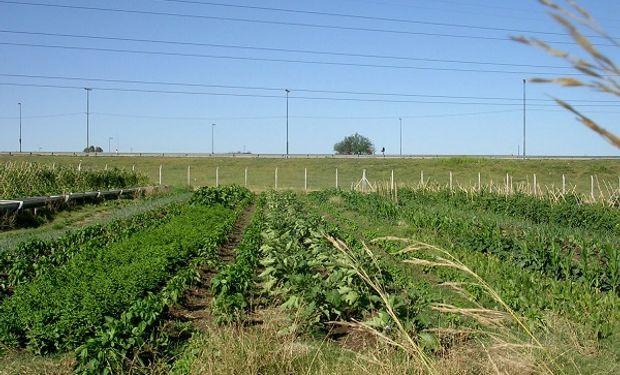 El proyecto Cinturón Verde consiste en transformar las áreas periurbanas en producción de alimentos sustentables.