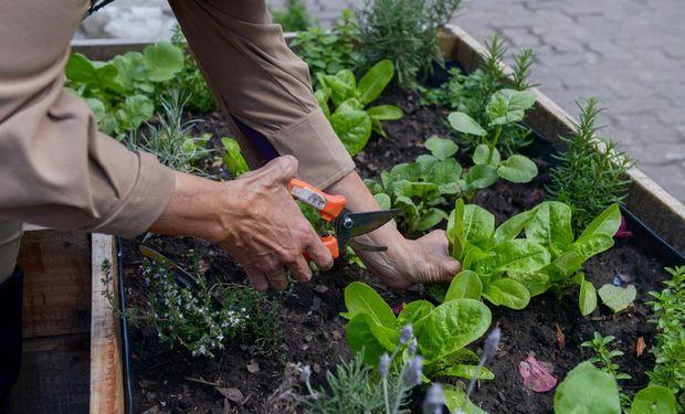 Huerta: 9 recomendaciones para producir en la temporada otoño-invierno