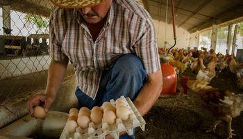 Los 5 pedidos del sector avícola al nuevo gobierno para potenciar la industria del huevo