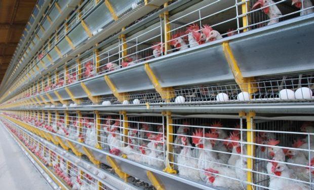 Con capacidad para procesar más de 21.000 huevos por hora, el emprendimiento abastecerá a la industria panificadora y pastelera.