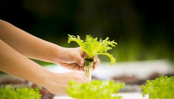 AgriFoodTech: más 400 startups de Latam aplicaron al programa