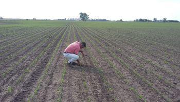 Buenos Aires: finalmente, los ingenieros agrónomos tendrán su propio colegio