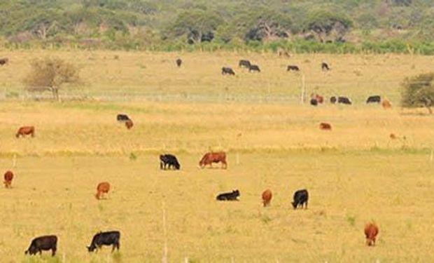 La ganadería enfrenta dificultades por la ley de bosques