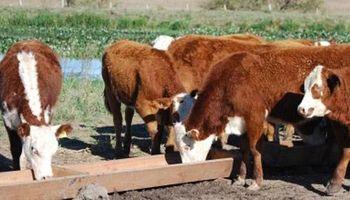 SENASA advierte por intoxicación con Duraznillo Negro en ganado bovino