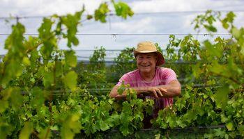 """Productor busca posicionar a Entre Ríos como polo vitivinícola: """"Pasear por Gualeguaychú es como caminar por Bordeaux"""""""