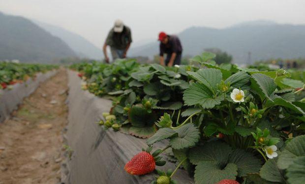 Será del 20 al 23 de noviembre. Lo organizará el Ministerio de Agroindustria en conjunto con la FAO.