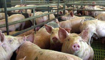 En ArgenCarne los porcinos desembarcan con la necesidad de seguir creciendo