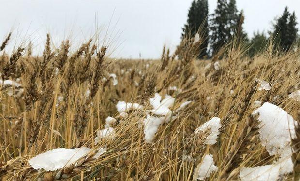 Trigo: el clima frio en las Planicies norteamericanas y la seca en Australia le brindan soporte a los precios.