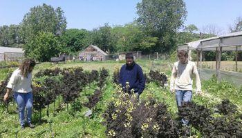 Estudian las propiedades agronómicas de una hortaliza en auge