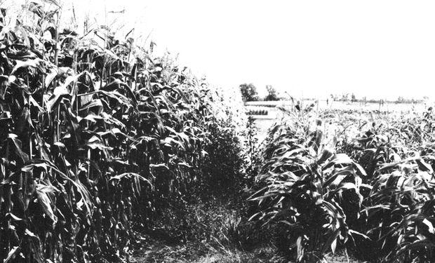 A mediados de los '60, realizó pruebas para evaluar la incidencia de diferentes profundidades de arada sobre la humedad del suelo, con labranza cero como punto mínimo explorado.