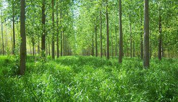 Una investigación muestra cómo duplicar la oferta de forraje bajo forestación