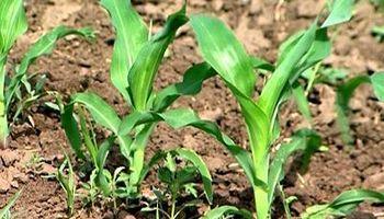 Nidera Nutrientes presenta FosZinc