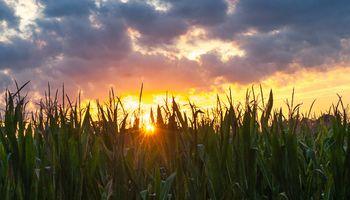 Soja y maíz: con algoritmos e inteligencia artificial, invitan a productores a realizar una clasificación remota de sus cultivos