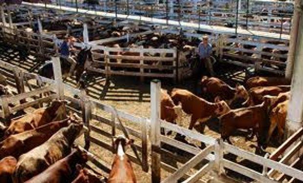 Escasa oferta de animales en Liniers