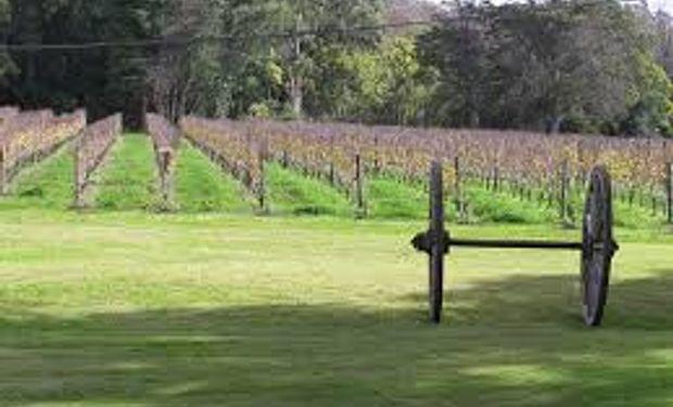 Fuerte pelea entre azucareros y los productores de vino