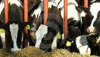 La lechería, en un nuevo brete