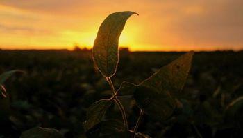 """Delicada situación financiera en empresas del agro: """"Habrá que tomar decisiones difíciles"""""""