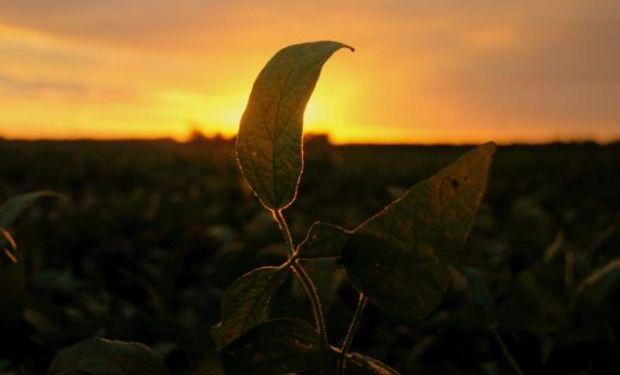 El ánimo no es el mejor por una sequía que no afloja.