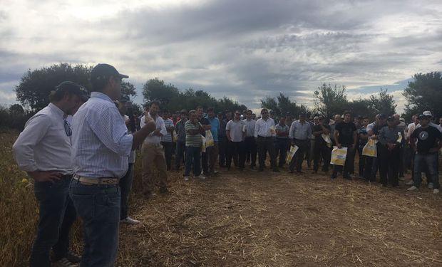Un campo ubicado a la vera de la autopista Rosario-Córdoba, cercano a la localidad de Toledo, fue sede de una jornada Campo Líder organizada por Nidera.