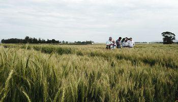 Esta herramienta online te ayuda a elegir qué variedad de trigo sembrar