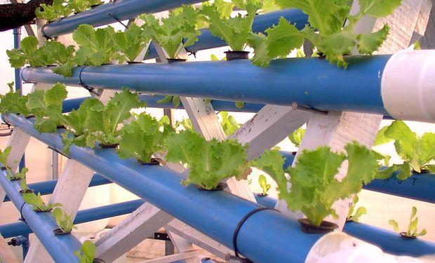 Cultivo hidropónico sistema NFT en General Pico