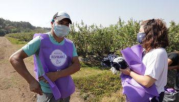 Implementan app para alertar ante situaciones de trabajo infantil en cultivos de arándanos