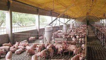 Buscan subir producción de carne porcina y aviar