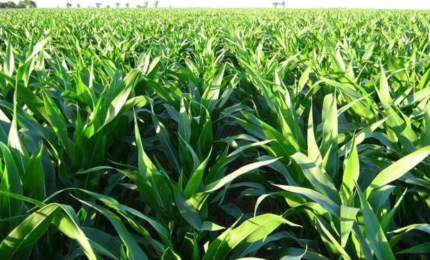 Los fitosanitarios son una de las herramientas utilizadas dentro de un sistema de intensificación sustentable.