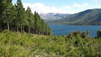 Una científica premiada por su trabajo en el ecosistema patagónico