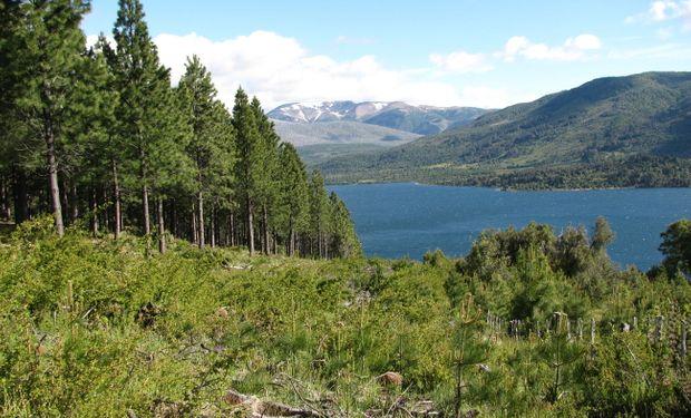 Austin estudia el funcionamiento de los ecosistemas terrestres de la Patagonia y la forma en que la actividad humana lo altera.