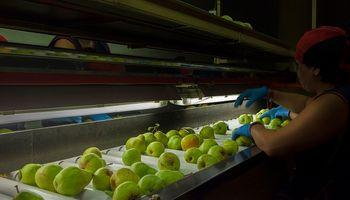 Buscan levantar el cierre de Brasil para las peras y manzanas de Argentina