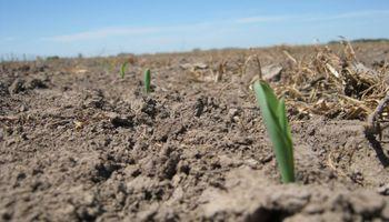 """""""Los suelos de la región pampeana están castigados"""": qué recomiendan para mejorarlos"""