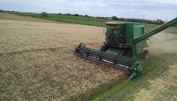 La cosecha de trigo, con mayor margen para el productor