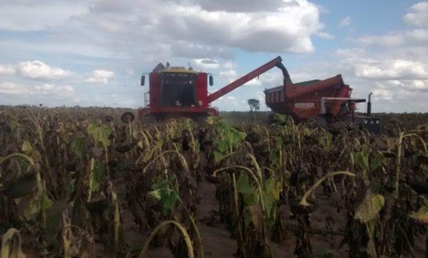 Productores de Chaco enfrentaron algunos inconvenientes en el arranque de la cosecha de girasol: la respuesta de la AFIP.