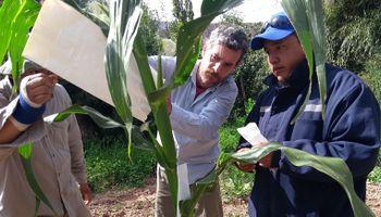 Dos facultades de la UBA al rescate de maíces nativos de Jujuy