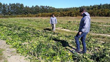 Decomisaron 4200 plantas cítricas producidas en Entre Ríos por HLB
