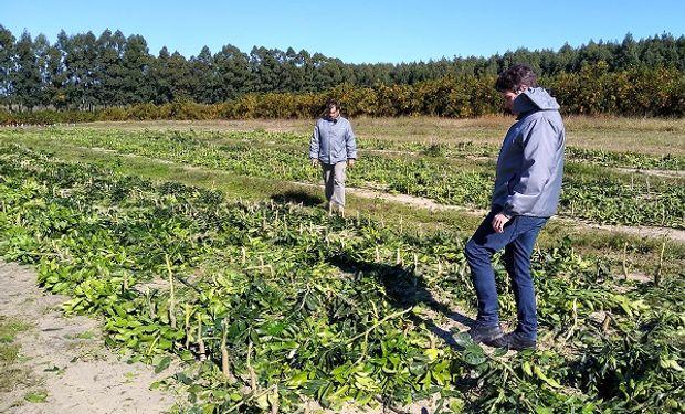 Agentes del Senasa tras la destrucción de las plantas cítricas.
