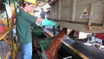 El campo como fuente de empleo: estiman que genera 5,5 millones de puestos de trabajo