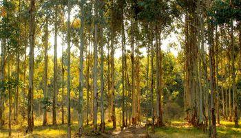 Miden los gases de efecto invernadero provenientes de la actividad forestal