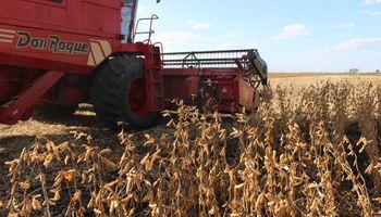 Con un 80% cosechado, la producción de soja argentina se estima en 36 mill.tt.