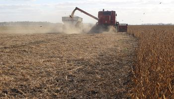 Insólito: cosechaban un campo sin consentimiento del propietario y los atrapó Patrulla Rural