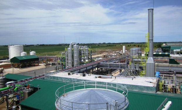 La planta de ACA Bio muele 350 mil toneladas de maíz por año para producir etanol.