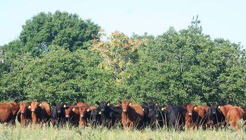 Mueren 99 vacas en La Pampa y sur de Buenos Aires