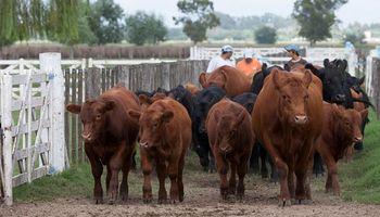 En el sur de Buenos Aires un 44% del agua analizada no es apta para consumo de bovinos