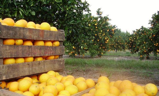 Producción citrícola genera más de 100 mil puestos de trabajos.